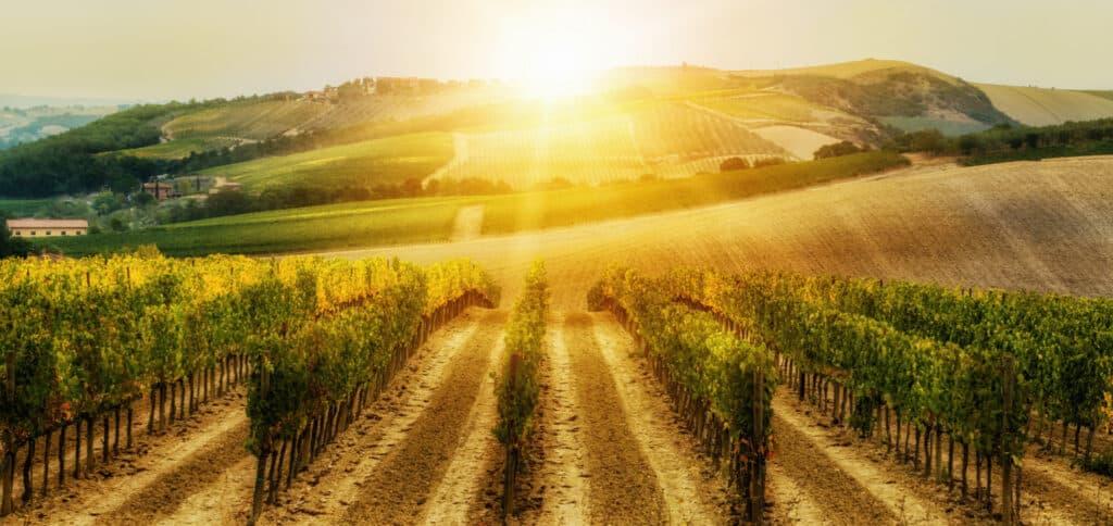 viaggio on the road toscana tra le vigne