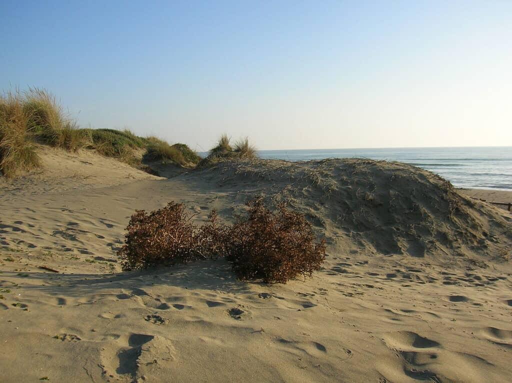 Le Dune di Capocotta