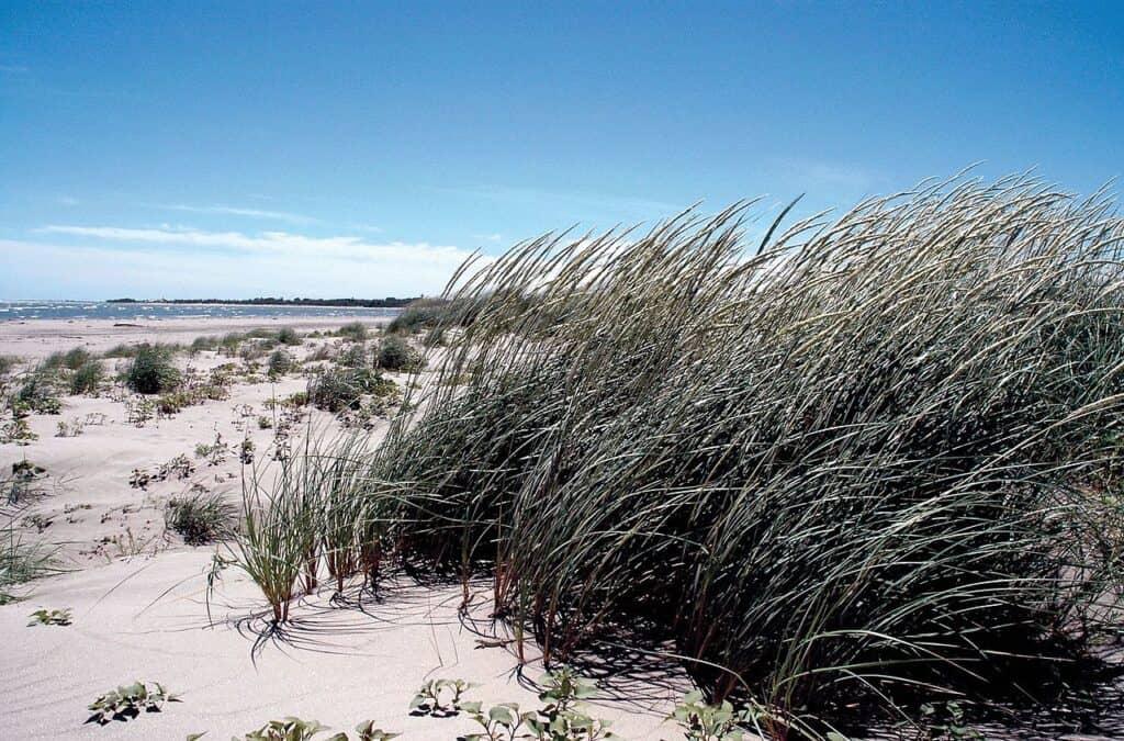 Lu dune di Porto Caleri